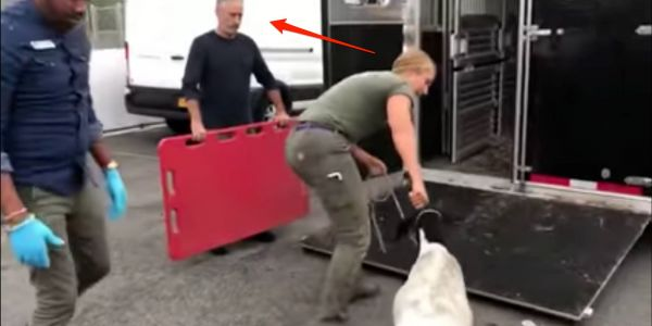 Jon Stewart helped rescue the 2 goats that wandered onto the subway tracks in Brooklyn