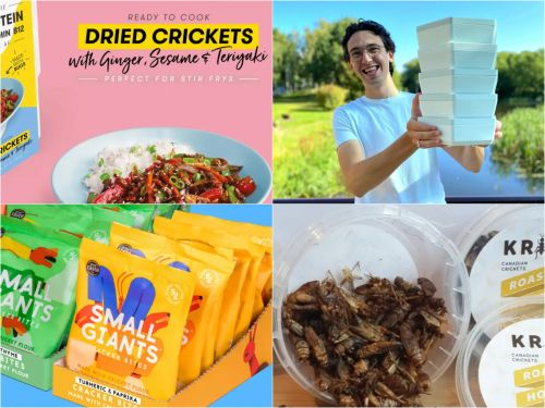 Edible worms and crickets are becoming big business. Here are 10 companies hoping to cash in on a growing trend