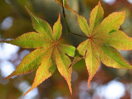 Here's why you should add maple leaf extract to your skin-care routine, according to new research