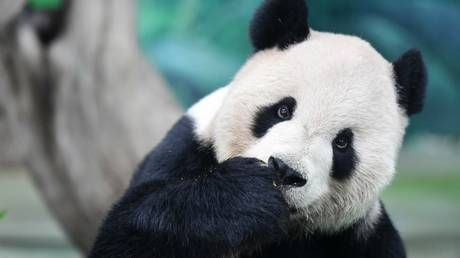 Russia plans to issue its first 'Panda' bonds next year - finance ministry