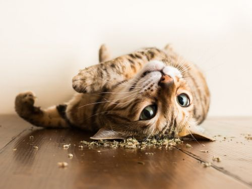 This photographer captures cats enjoying catnip - and the pictures will make you laugh out loud