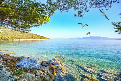 A luxury cruise company is offering a scholarship to travel Croatia for free and help save dolphins and turtles, with accommodation, meals, and transport included