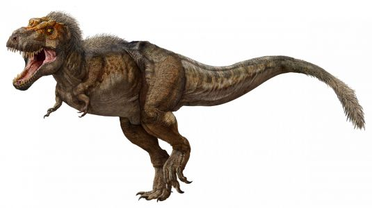 Paleontologists have discovered the world's biggest and longest-lived T. rex. It weighed almost 20,000 pounds