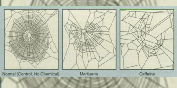 An old NASA study gave spiders drugs to see how it affected their webs, and it'll make you want to never drink coffee again