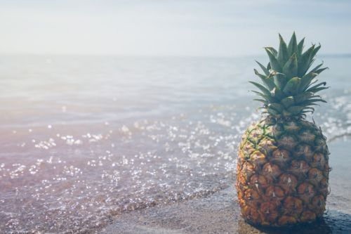 Pineapple Fund drops $1M on the Sustainable Ocean Alliance and its new accelerator