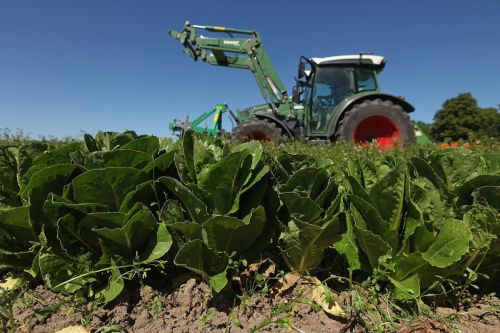 Health officials warn not to eat romaine this Thanksgiving because they're worried about E. coli - here's what the illness is