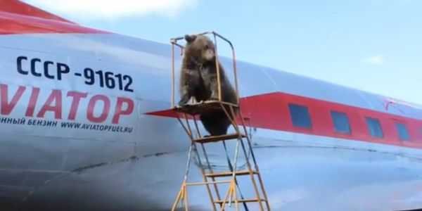 A group of pilots in Russia adopted a wild bear, and launched a crowdfunding campaign to feed him and build him a home