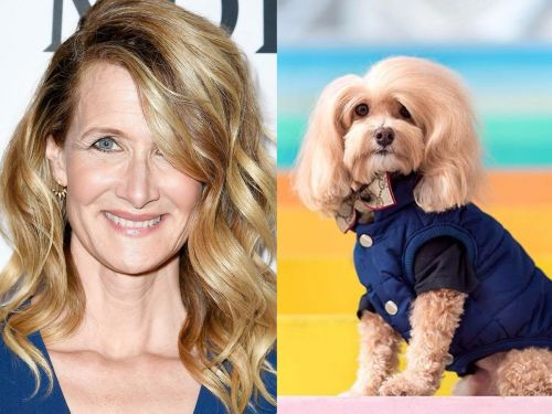 5 times people swore that dogs looked like celebrities