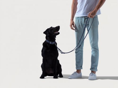 11 pet startups that are taking on traditional brands with more innovative products