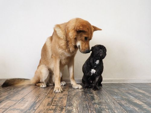 Big dogs may be smarter than small dogs, according to a new study, but only in tests of memory and self-control