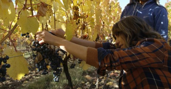 Amazon Shines Spotlight on Wine Industry With Glossy New Docu-Series