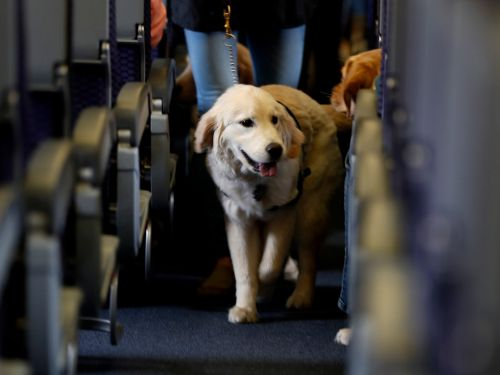 Delta has banned all emotional support animals on long flights