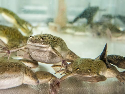 The CEO of one iron company says he's boiling short sellers 'like frogs'
