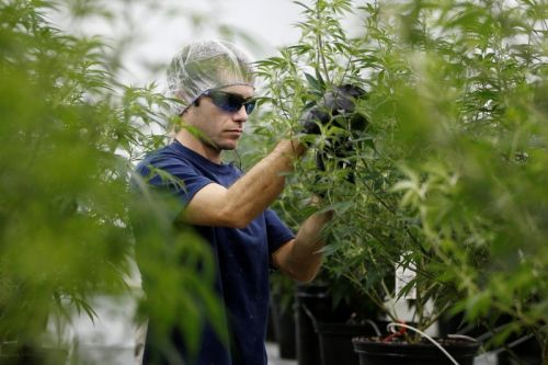 Marijuana is the fastest-growing industry in the US job market, according to a new report