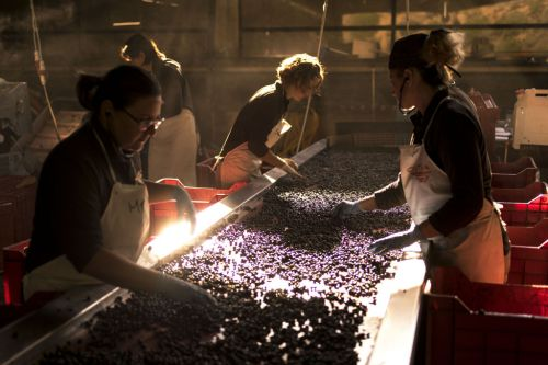 How Wines From a Little-Known Region Became Some of the Most Expensive in the World
