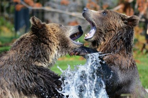 5 Signs That Global Financial Markets Are Entering A Bear Market, And 11 Ways That You Can Get Prepared For The Chaos That Is Coming