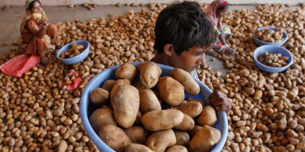 The $177 billion owner of Lay's chips is suing small-time Indian farmers for growing a type of potato it claims exclusive rights over