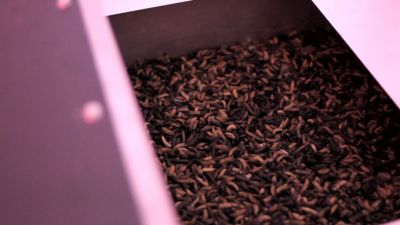 Entocycle uses larvae to fuel a more sustainable food chain
