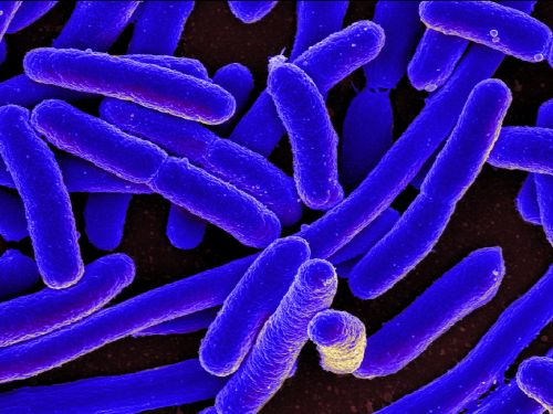 The microbiome has been called the forgotten organ - and it could hold the 'next paradigm shift in science and medicine'