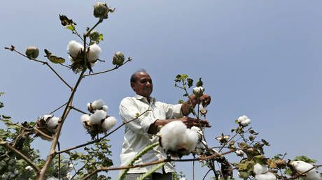 Monsanto abused dominant position in India, overcharging farmers for GMO seed - probe