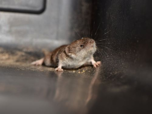 14 of the smallest animals on Earth