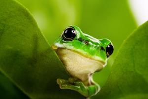 New gene-editing kit puts the power of frog growth into citizen scientists' hands