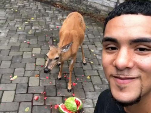 A guy who went viral for becoming friends with deer apologized for the racist tweets he wrote when he was 12