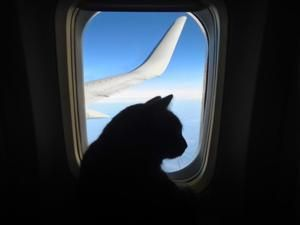 Pets on a plane: Airlines turn to government for help in taming rise of emotional support animals