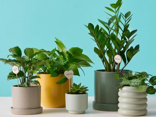 Plant delivery startup The Sill makes it easy to learn about which plants are right for your home - here's how it works
