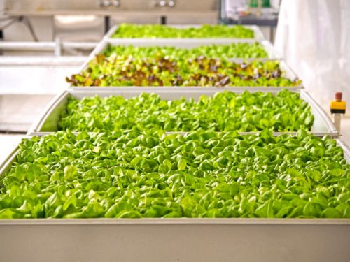 GV leads $90 million investment in Bowery to grow its indoor farming business