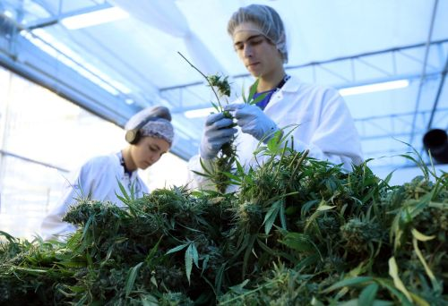 The cannabis industry is set to employ 400,000 people in the US by 2021 - here's how much key jobs in the industry pay, from budtender to cultivation director
