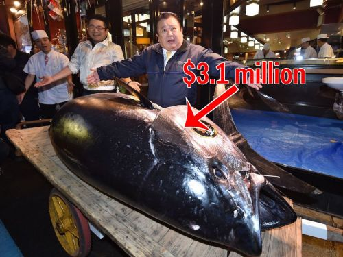 A 612-pound tuna sold for a record $3 million at Tokyo's new fish market, but it's got nothing on the legendary market it replaced. I visited it before it closed