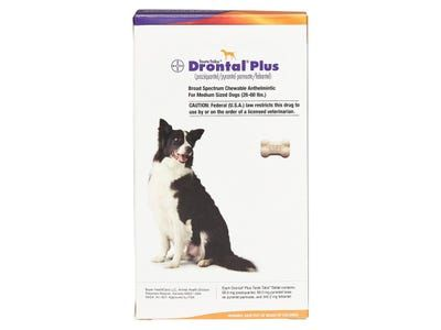 The 4 best dog dewormers and parasite prevention medicines in 2021