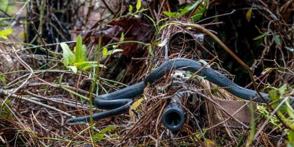 Army snipers played hide-and-seek to test new camouflaged ghillie suits for next-level combat