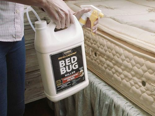 How to get rid of bed bugs and the products you need to do it