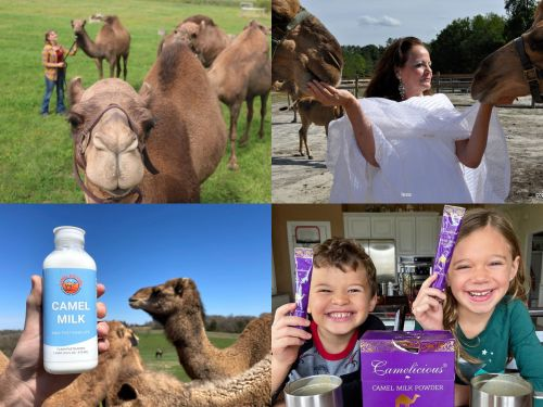 Camel milk is healthy, expensive, and booming. Here are 7 companies trying to convert you to it from cow milk
