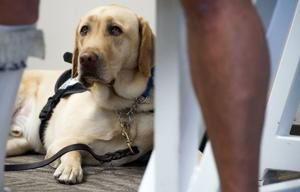 New Southwest Airlines emotional support animal policy allows only dogs and cats on leashes or in carriers