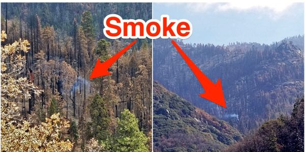 An enormous Sequoia tree is still smoldering and emitting smoke months after California's devastating wildfires