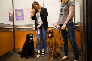 Alexa, how many dogs come to work at Amazon Seattle? 7,000