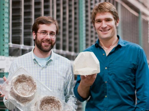 A startup that turns mushrooms into IKEA packaging wants to become the backbone of the lab-grown meat industry