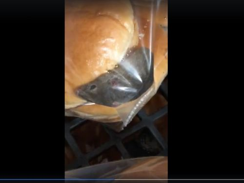 Viral footage shows a live mouse wiggling in a bag of burger buns at Wendy's