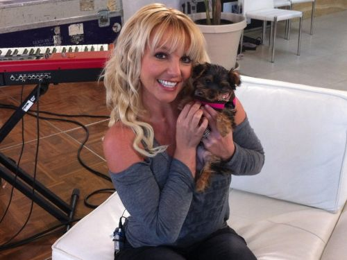 Britney Spears reportedly spent nearly $30,000 on her dogs last year - and she's not the only celeb dropping bank